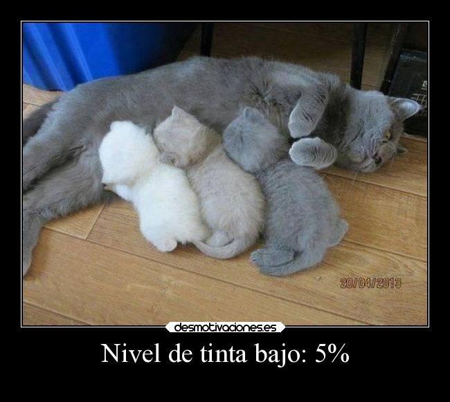 carteles gatos impresora sin tinta uhumor jesshellscythe desmotivaciones