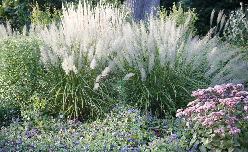 ziergr ser leicht und elegant pinterest gardens garden ideas and garten. Black Bedroom Furniture Sets. Home Design Ideas