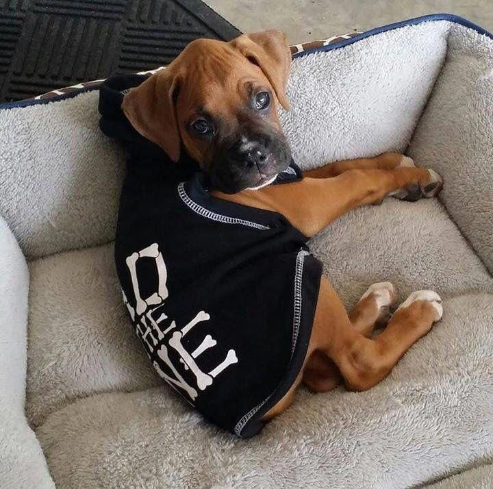 Pin by Ciara on Friends for dogs in 2020 Boxer puppies