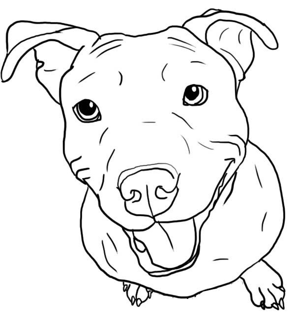 For Izzy Sketch Pitbull Drawing Dog Coloring Page Pitbull Colors