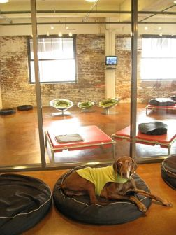 Tips For Boarding Your Dog Dog Boarding Facility Dog Boarding Ideas Dogs