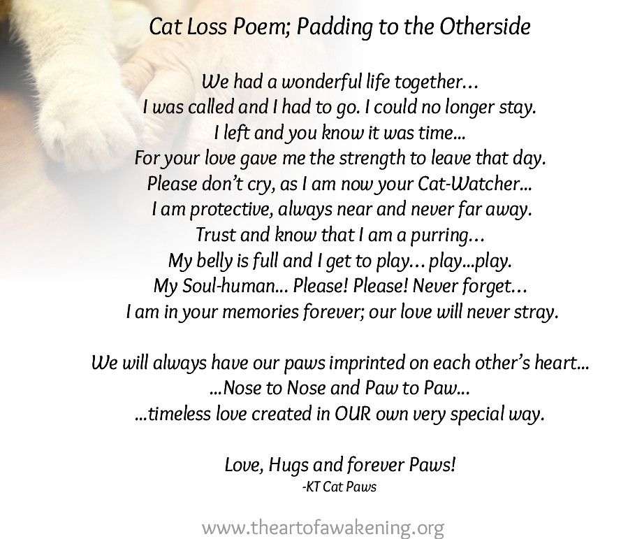 Rainbow Bridge, Cat Loss, cat passing there is a ceremony