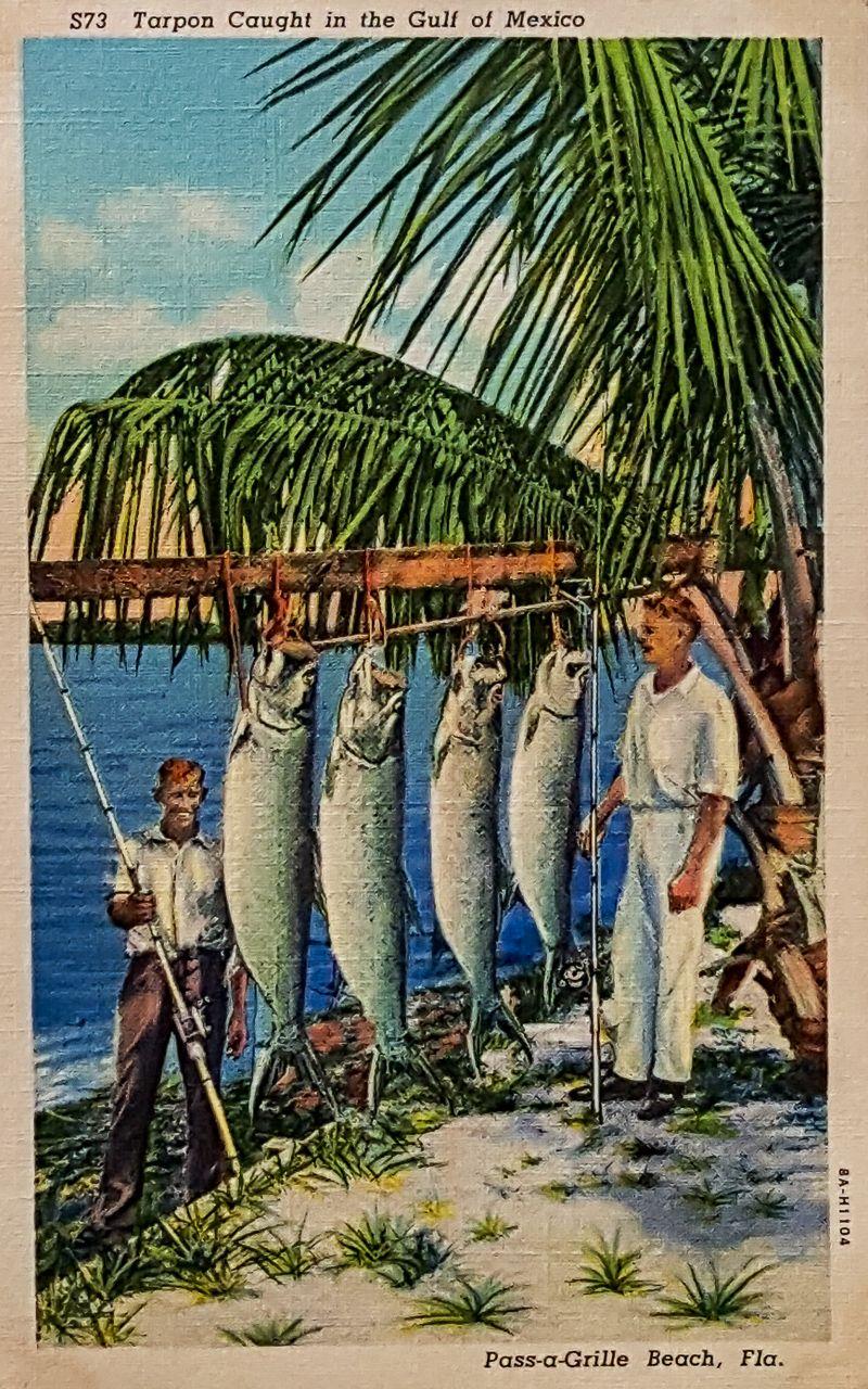 Pin On Postcards Florida Vintage