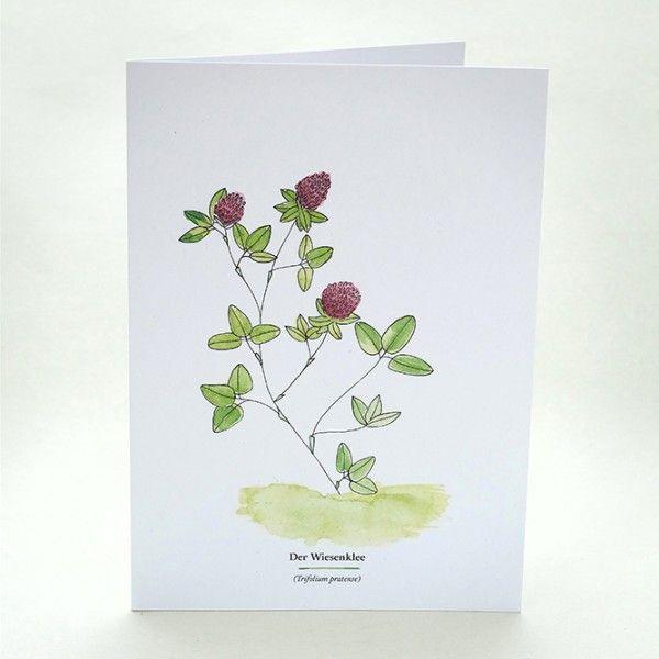 Kräuterwanderung | Wegesrandkraeuterkarte Wiesenklee | greeting card with wild herbs | red clover| STUDIOKARAMELO