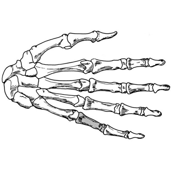 Coloring Page Hand Skeleton Liked On Polyvore Featuring Fillers