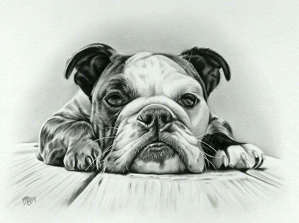 English Bulldog Dog Art Bulldog Art Dog Sketch