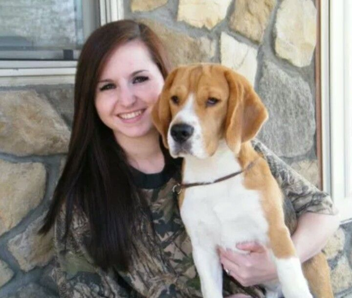 Beagle Puppy For Sale In Brockway Pa Adn 40121 On Puppyfinder