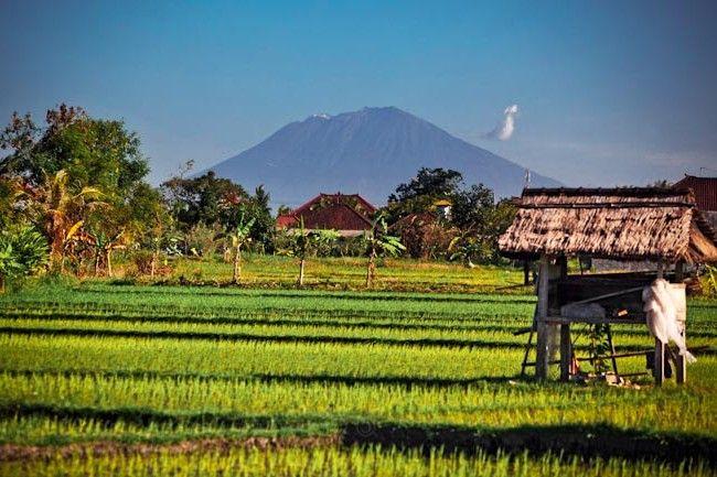 Gambar Pemandangan Sawah Di Bali Pemandangan Bali Gambar
