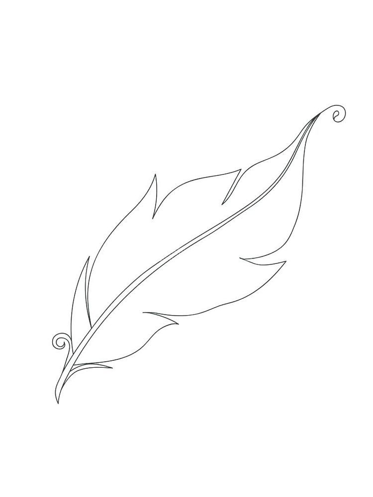 Feather Coloring Pages For Adults Feather Is A Body Cover
