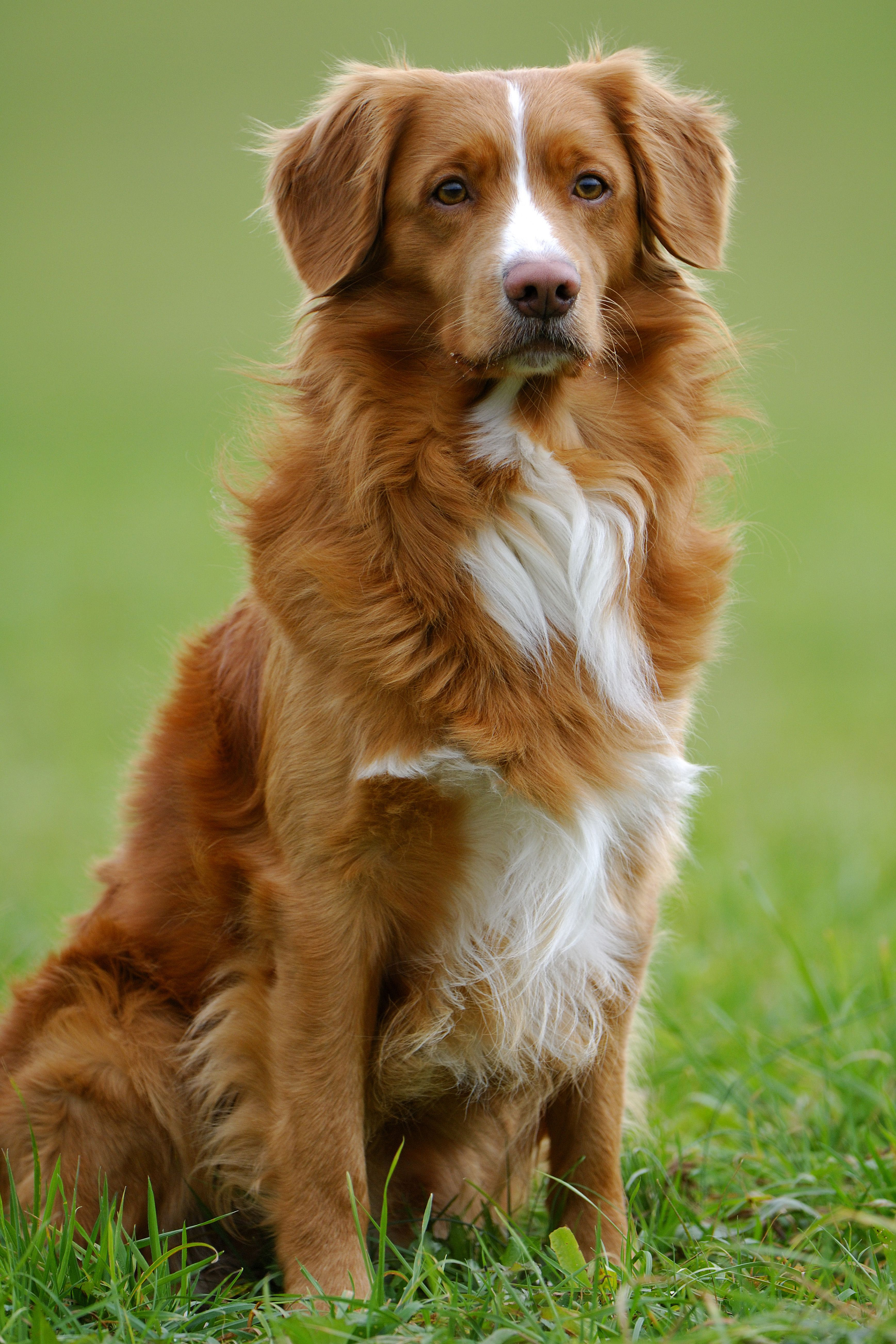 These Dog Breeds Are The Most Intelligent Experts Say Cute Dogs