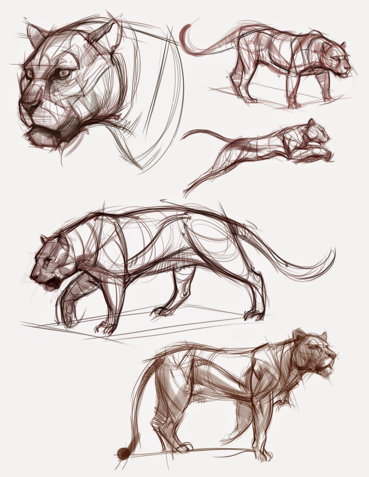 figuredrawing.info_news: Cat demos … | Pinteres…
