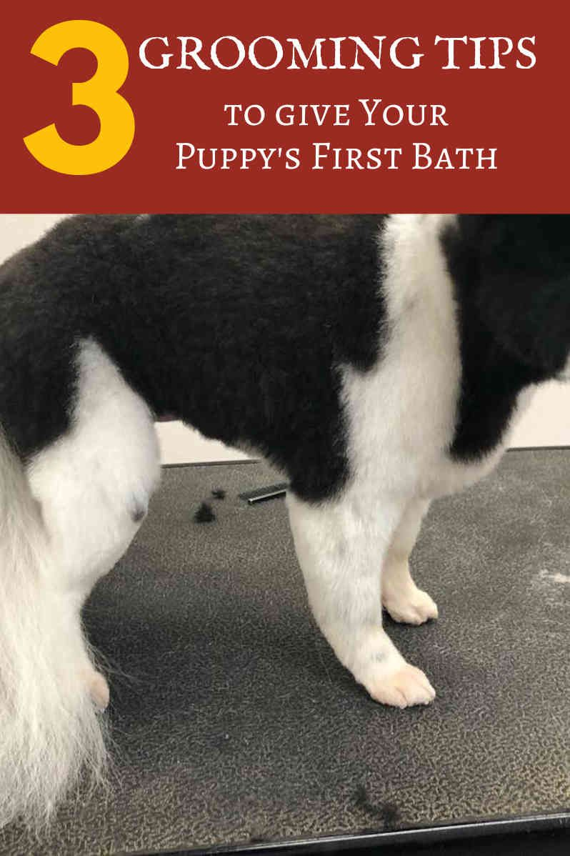 Dog Grooming Video Pinterest Dog Care Pet Grooming And Pet Care