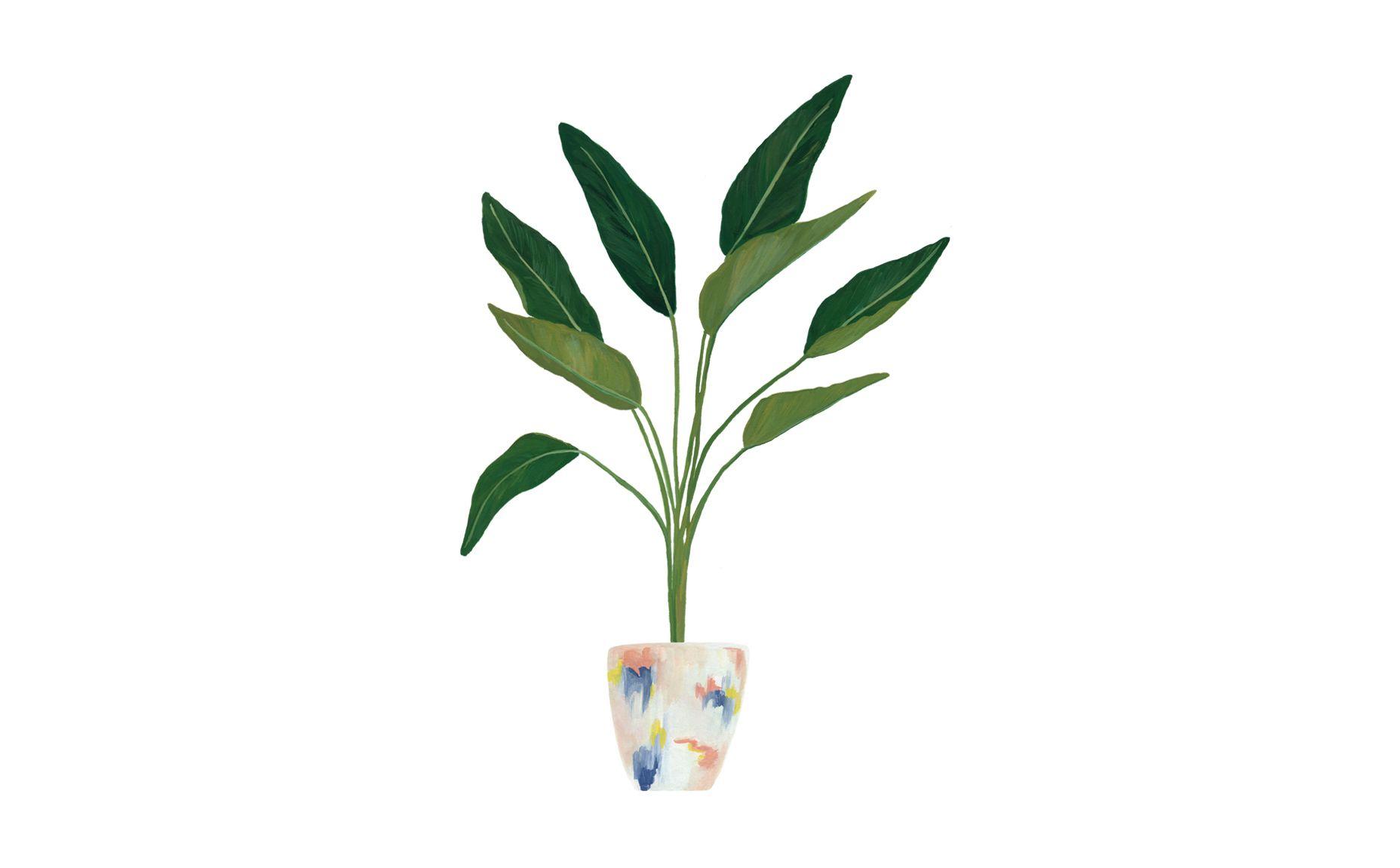 Minimal White Green Botanical Potted Plant Leaves Desktop