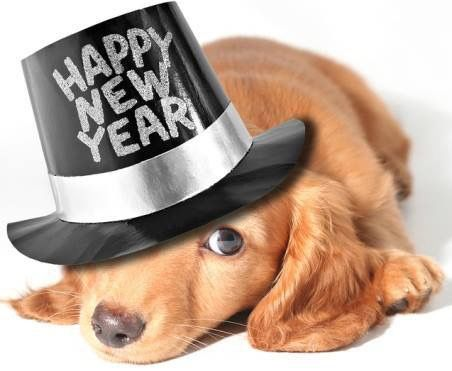 Pin By Kathy On Dachshunds Newyear Pet Safe Food Animals