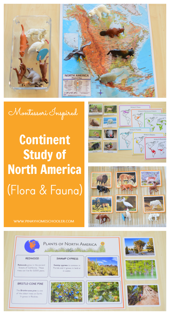 Montessori Inspired North America Study Flora and Fauna