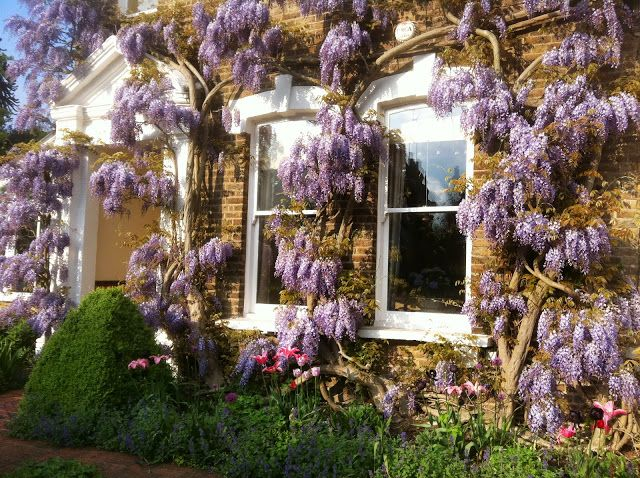 Wisteria Sinensis At Raworth Gardens Uk Garden Planting Flowers Garden Inspiration