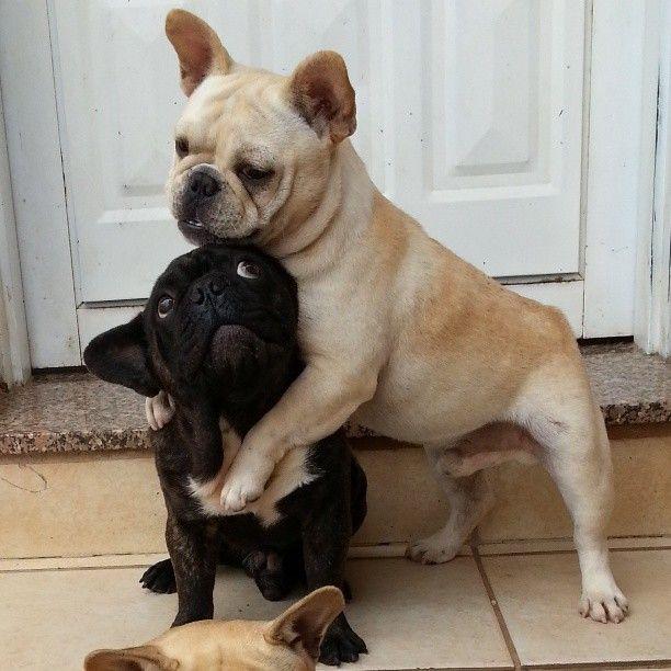 Resultado de imagen para Frenchie and owner hug