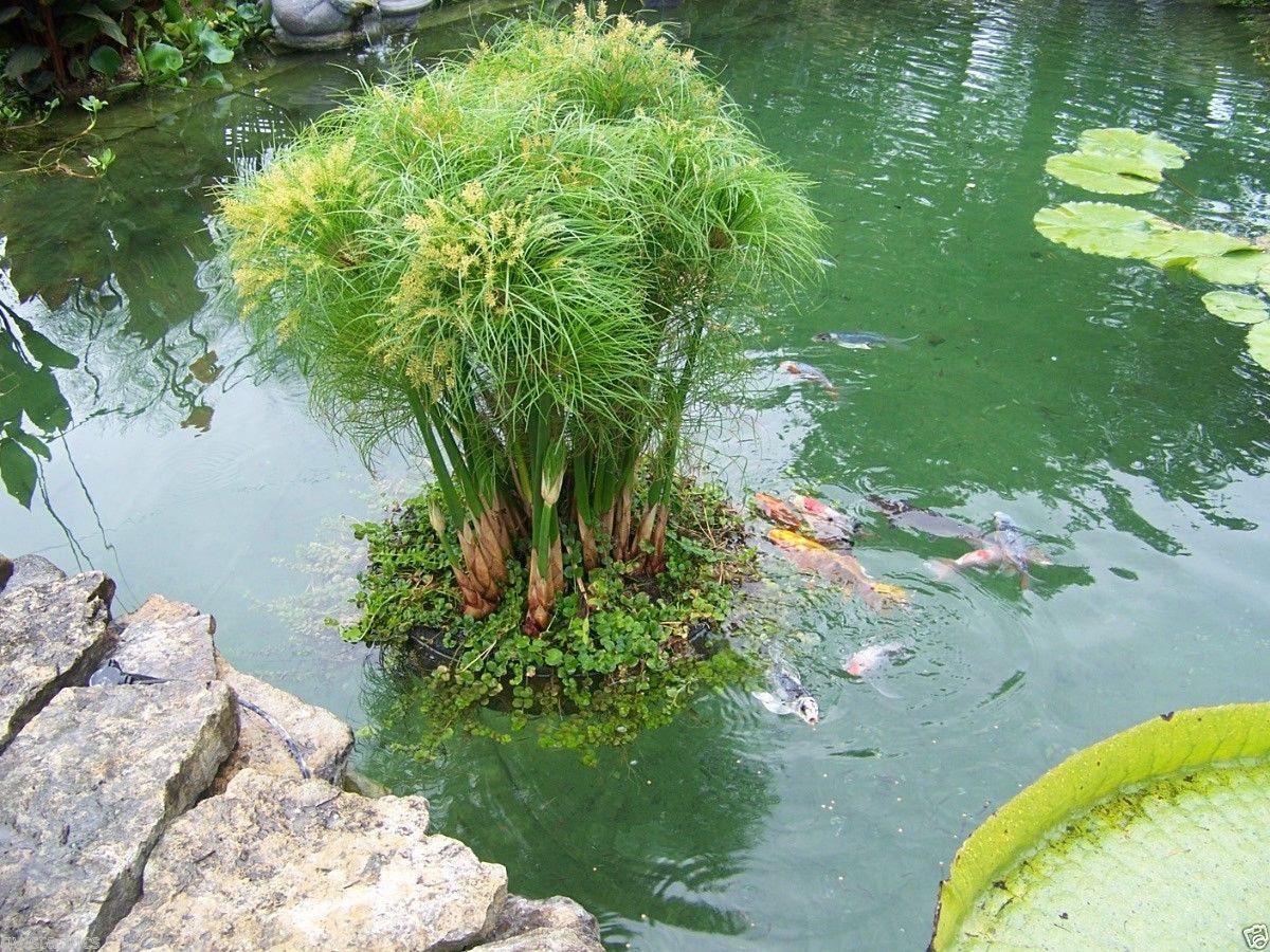 Goldfish pond species decor references - D Tails Sur 24 Floating Island Pond Planter Plant Koi Water Garden