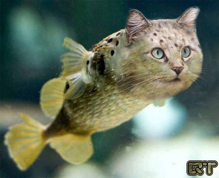 Catfish catfish my favorite hobby catfishing for Fish videos for cats