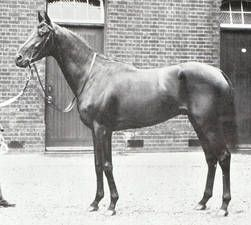 Minoru (UK) 1906 (Cyllene-Mother Seigel), winner of the 1909 Epsom Derby, ancestral sire of Hyperion through his daughter Selenissima.