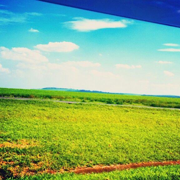 Chão Verde...