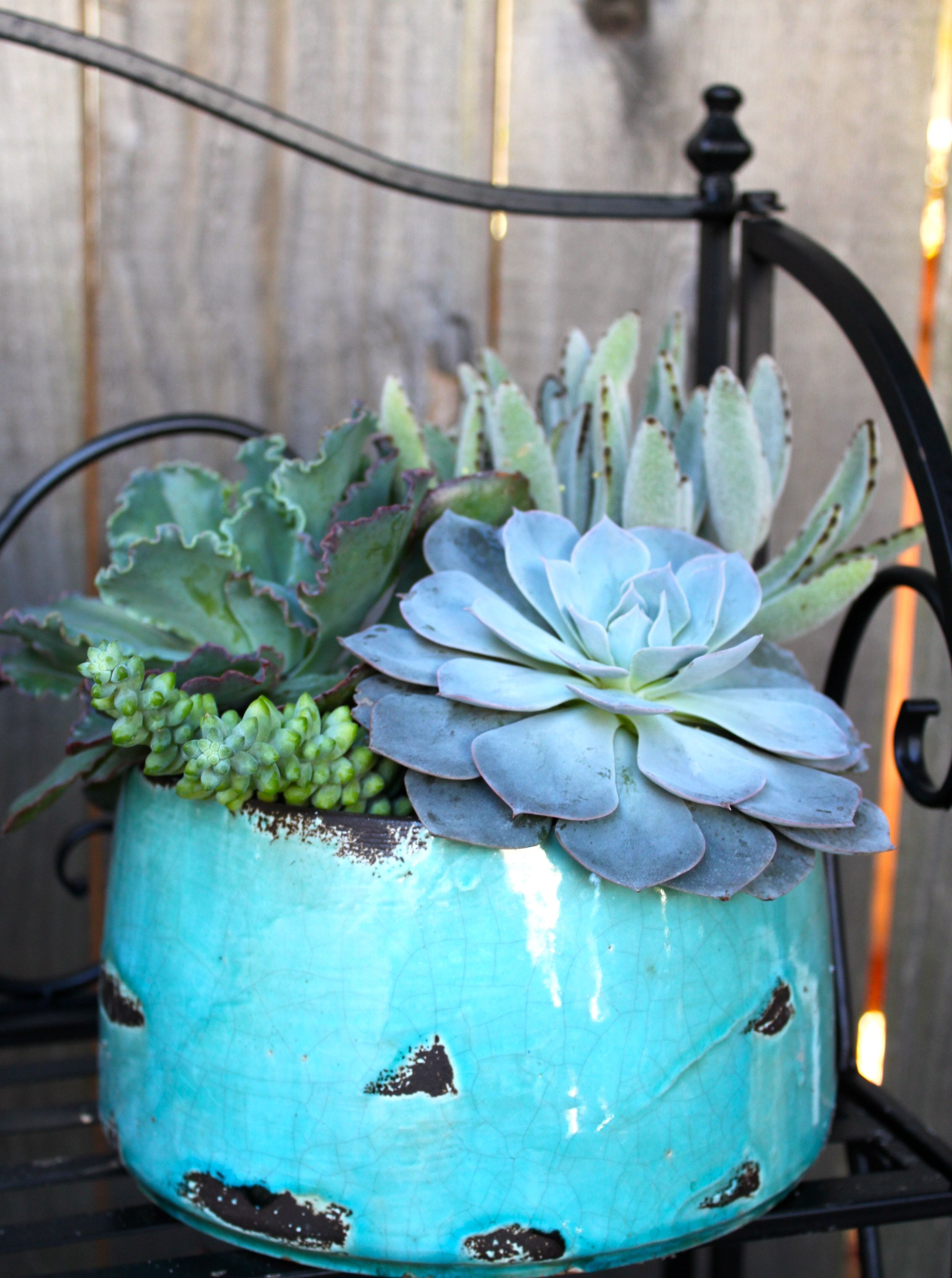 Lowes had succulents marked down to a dollar for four.  I love the blue...