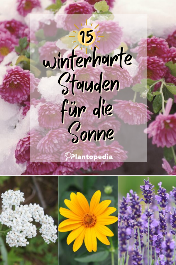 15 Winterharte Stauden Fur Sonnige Platze Winterharte Stauden Stauden Winterharte Pflanzen Garten