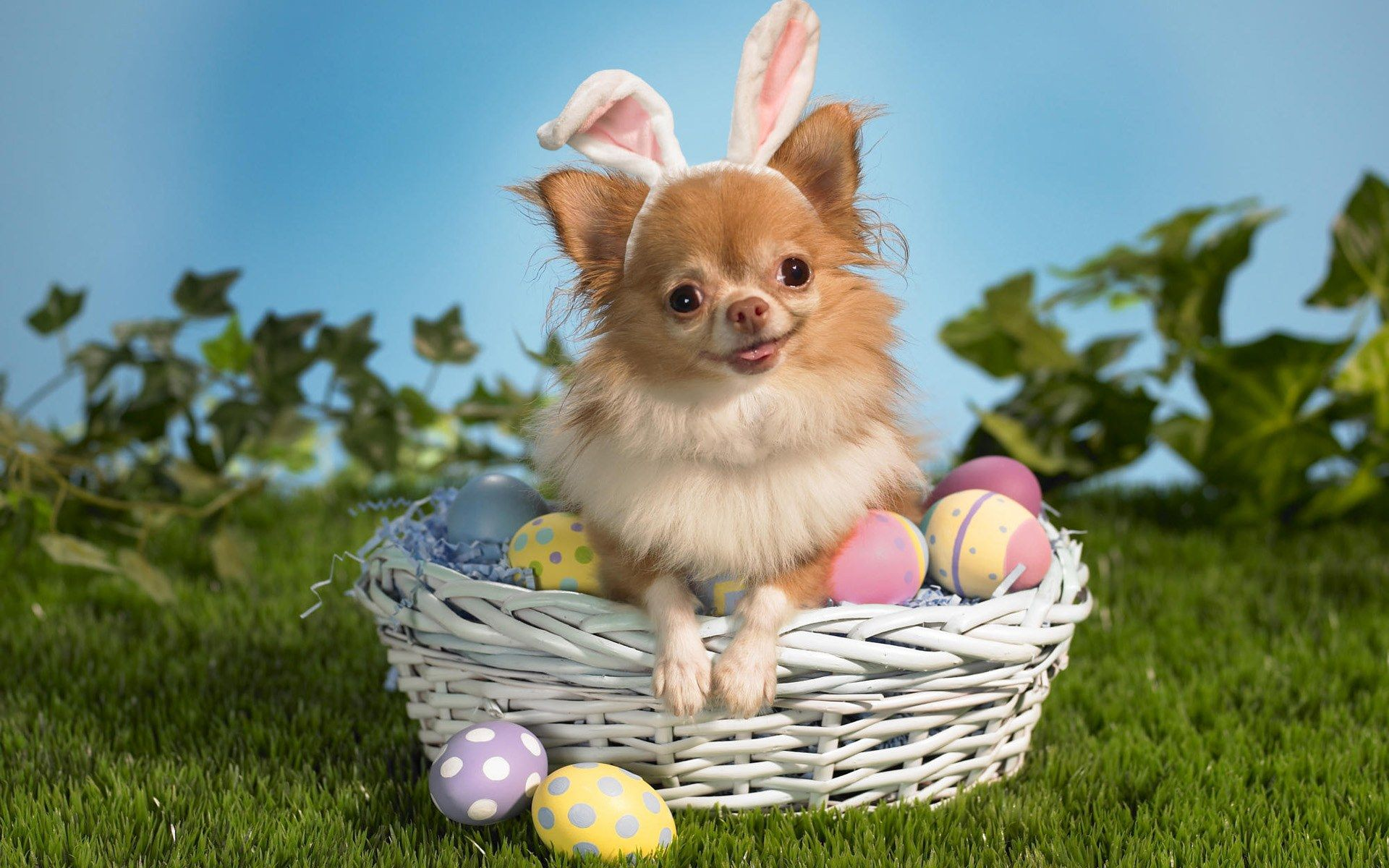 Funny Animal Pictures Wallpapers Funny Animal Animals Slides Best 1920x1200 Easter Dog Easter Pets Animals