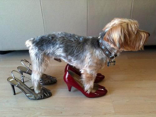 Dogs In Heels Funny Dog Pictures Funny Dogs Dogs