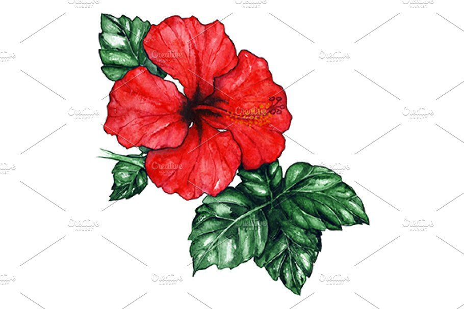 Watercolor Red Hibiscus Flower Plant In 2020 Watercolor Red Flower Drawing Leaf Illustration