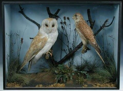 Owl Diorama idea | For the Kids | Diorama kids, ... on barn owl house plans, screech owl house plans, horned owl house plans, barred owl house plans,