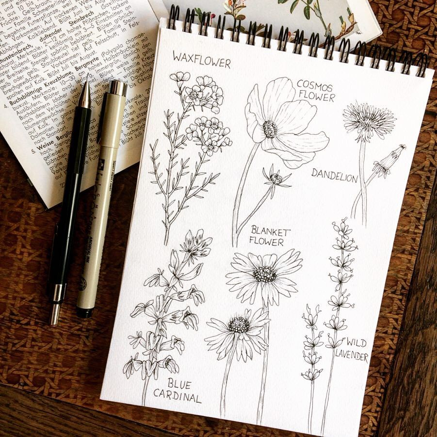 Posted A Time Lapse Of These Wildflowers A While Ago In My Stories But Forgot To Post The Finished Flower S Sketch Book Ink Illustrations Watercolour Tutorials