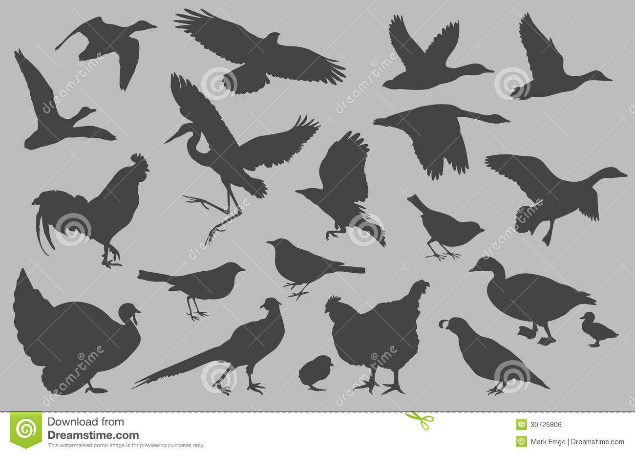 Risultati immagini per anatre in volo