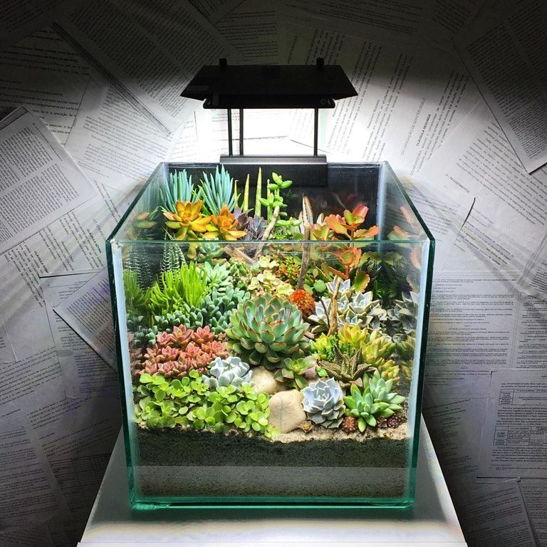 Photo of I started this terrarium months ago. This is what it looks like now. : Terrari …