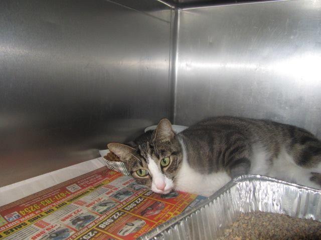 (182) URGENT CATS