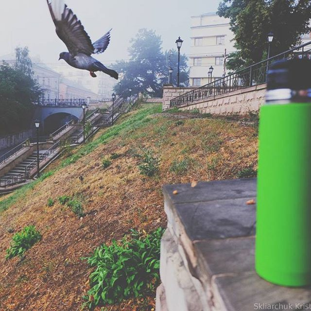 Fly away from here pigeon city green coffee thermos by ...