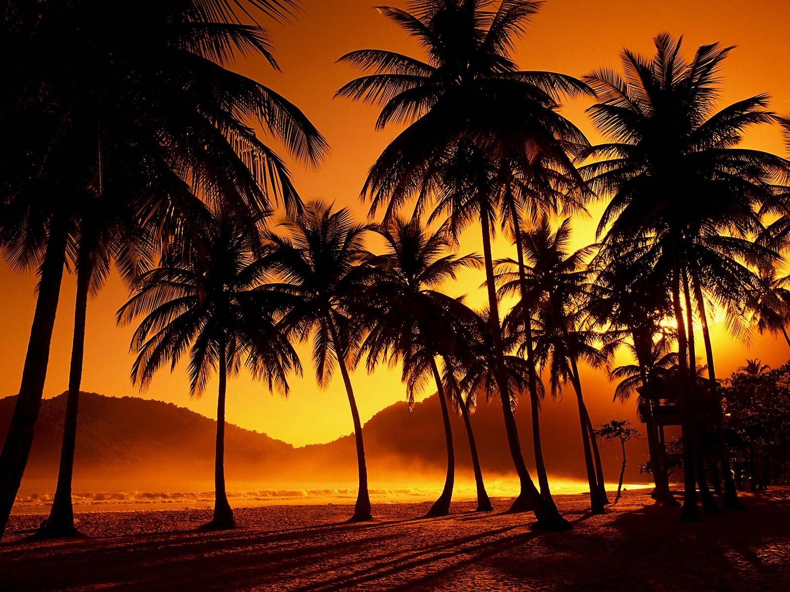 Palm Trees Silhouette HD desktop wallpaper Widescreen High