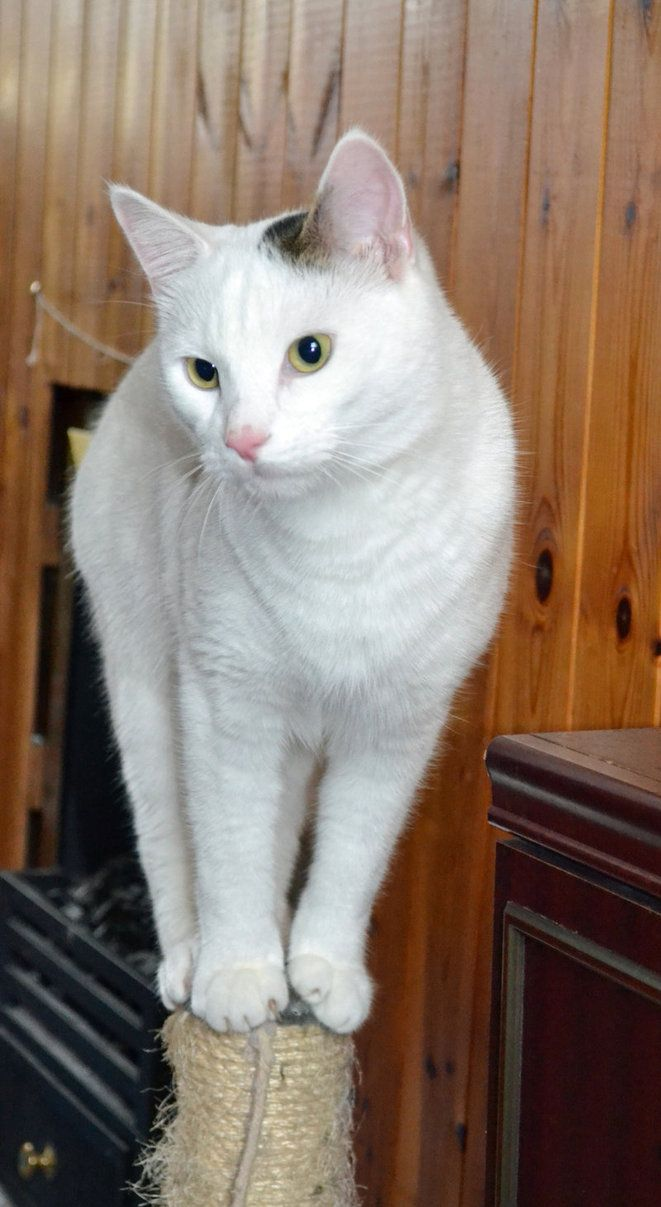 Balancing Cat by priwax on DeviantArt