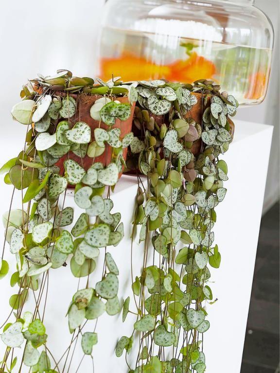 gr npflanzen im zimmer so werden sie in szene gesetzt plantes d 39 int rieur pinterest. Black Bedroom Furniture Sets. Home Design Ideas