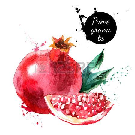 Main peinture l 39 aquarelle tir sur fond blanc vector illustration de fruits grenade en 2019 - Grenade fruit dessin ...