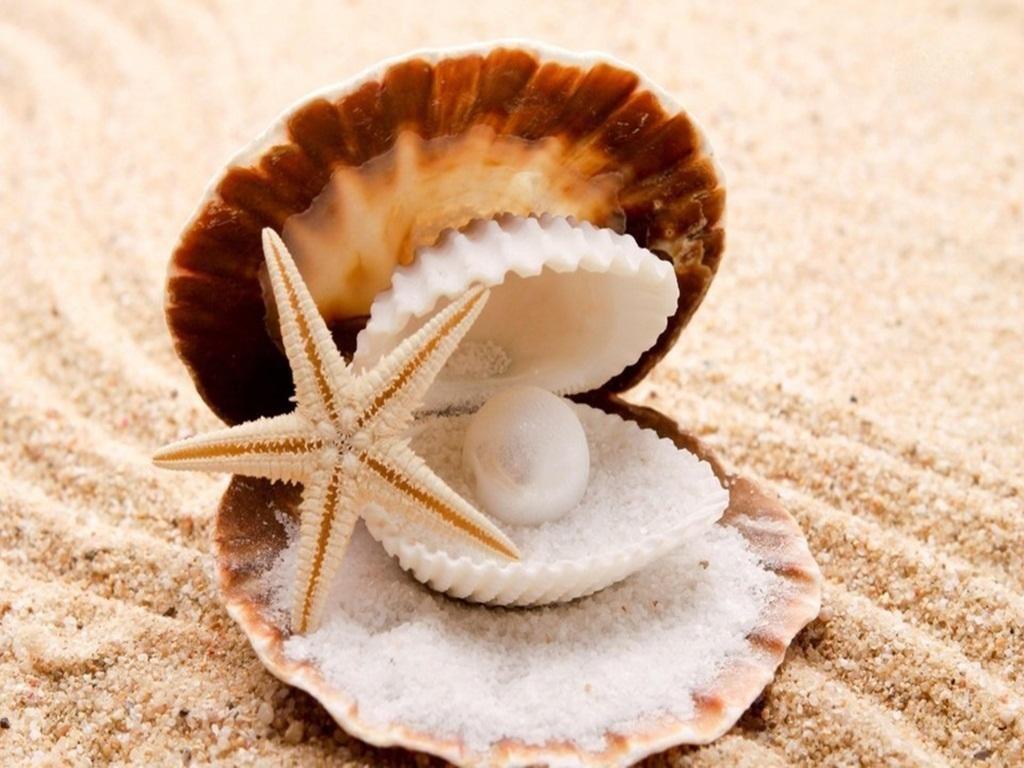 Wallpaper download best - Seashells Best Wallpaper Hd Quality Free Download