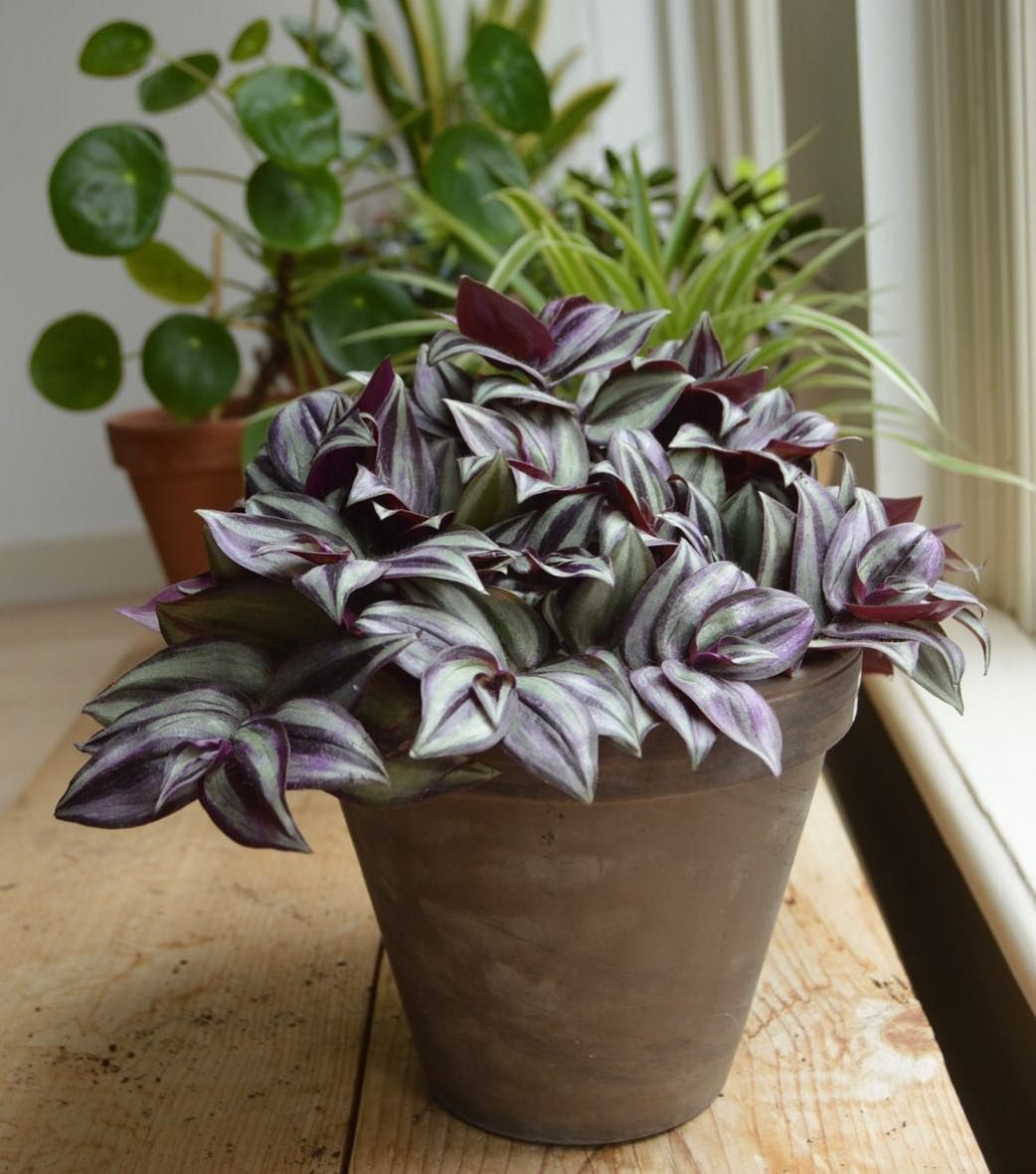 House Plants For Shady Rooms: Create A Sensory Oasis In Your Home With Houseplants