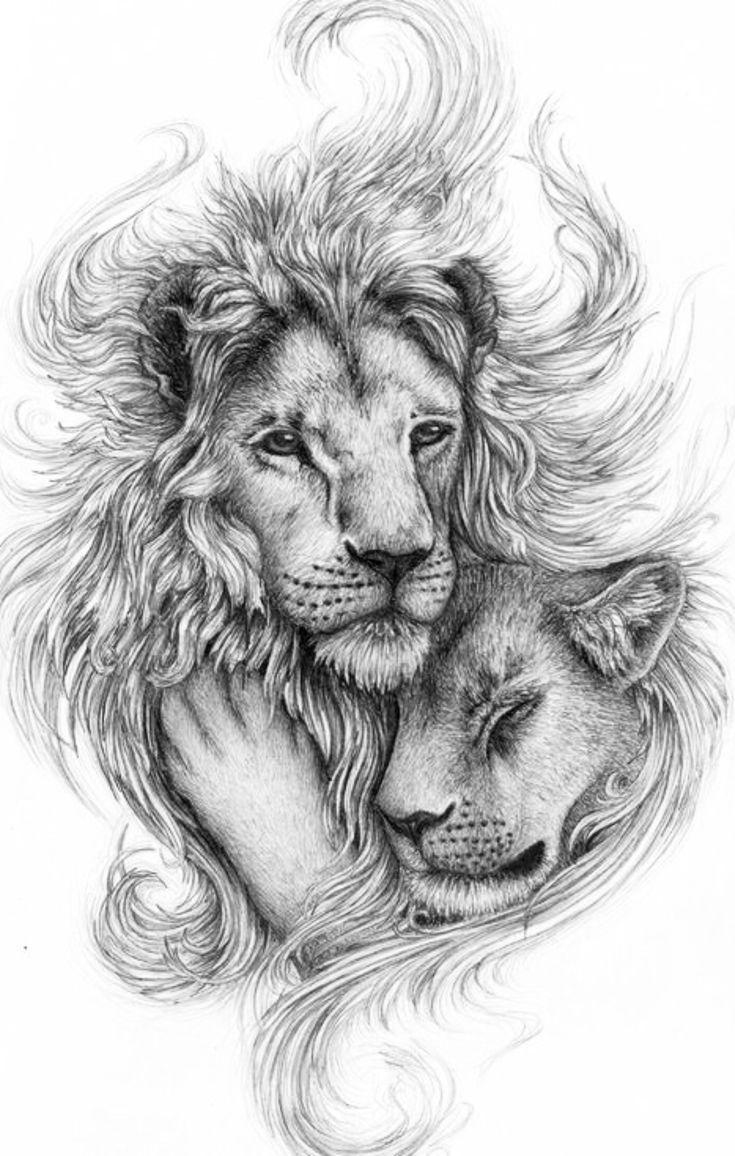 Красивые картинки львов для тату