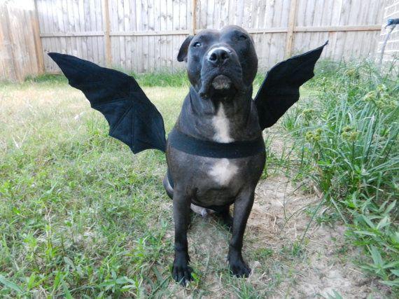 Now On Sale Bat Wings Dog Halloween Costume Custom Made Dog