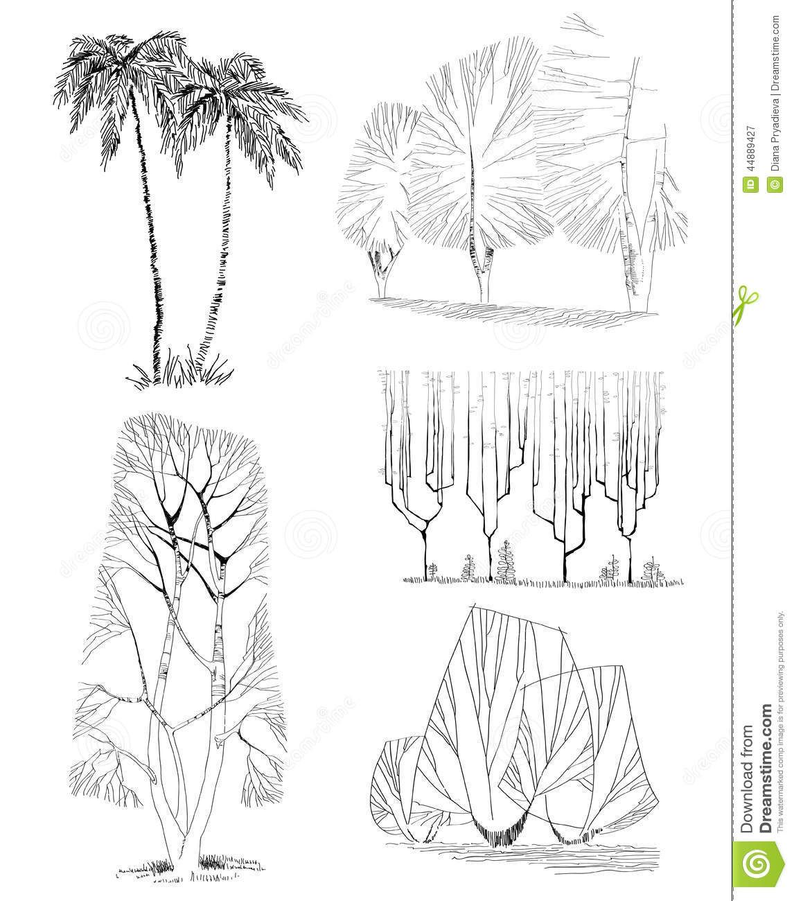 Architecture Drawing Of Trees architectural tree sketches hand drawn trees isolated, sketch