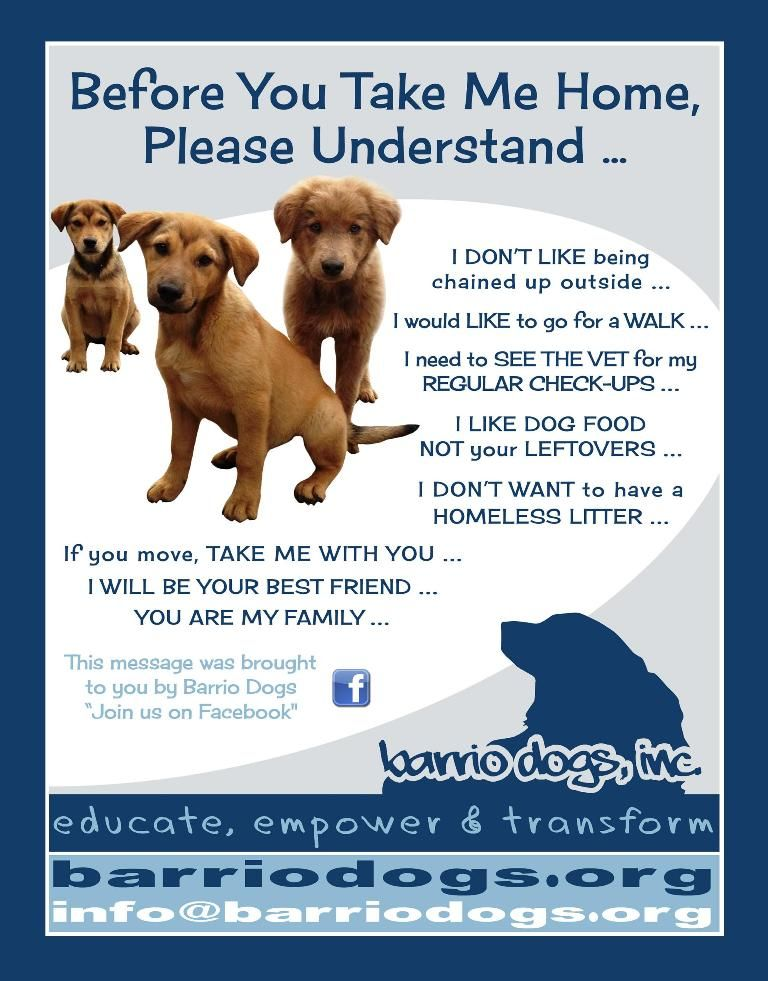 Barrio Dogs: Before You Take Me Home -   Consider everything before rescuing a  Pet from a shelter... that way they don't end up back at the shelter.  They are a life, a life you will be responsible for -- not own.