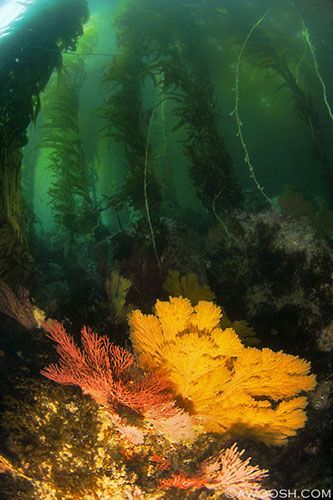 Postcards From The Edge California S Channel Islands Kelp Forest Underwater World Ocean Images