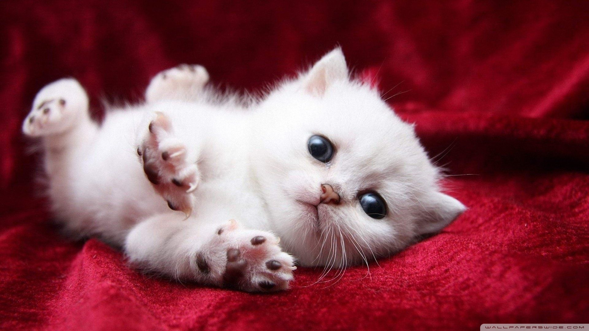 18 Adorable Kitty Cat Wallpapers Kittens Cutest Baby Cats Cute Baby Cats