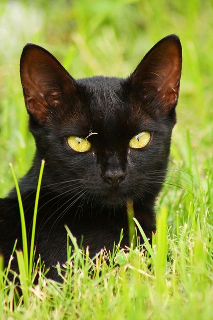 Black Kitten by Stacey Warnke Photography, via Flickr