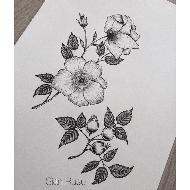 Sianyoooo Wild Rose Tattoo Rose Flower Tattoos Flower Drawing